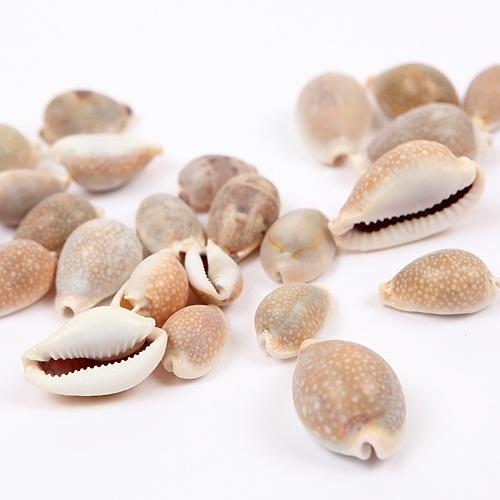 [조개류]집게형 고둥-50g