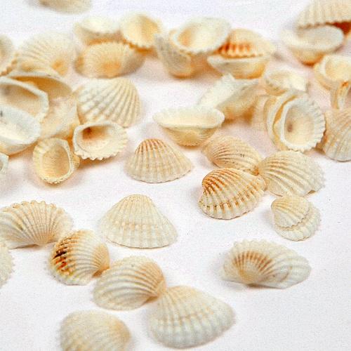 흰조개-50g