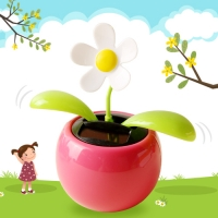 태양열로 움직이는 꽃-노호혼(5색랜덤)